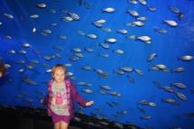 HD Zoo Aquarium 02