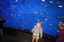 HD Zoo Aquarium 03