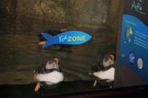 HD Zoo Aquarium 04
