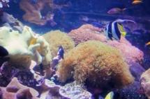 HD Zoo Aquarium 11