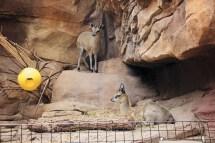 HD Zoo Desert Dome 18