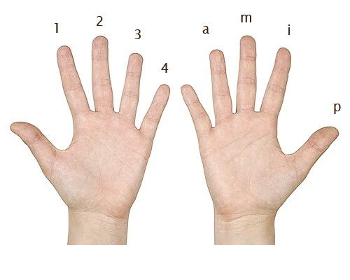 finger-names
