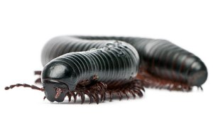 millipede-md