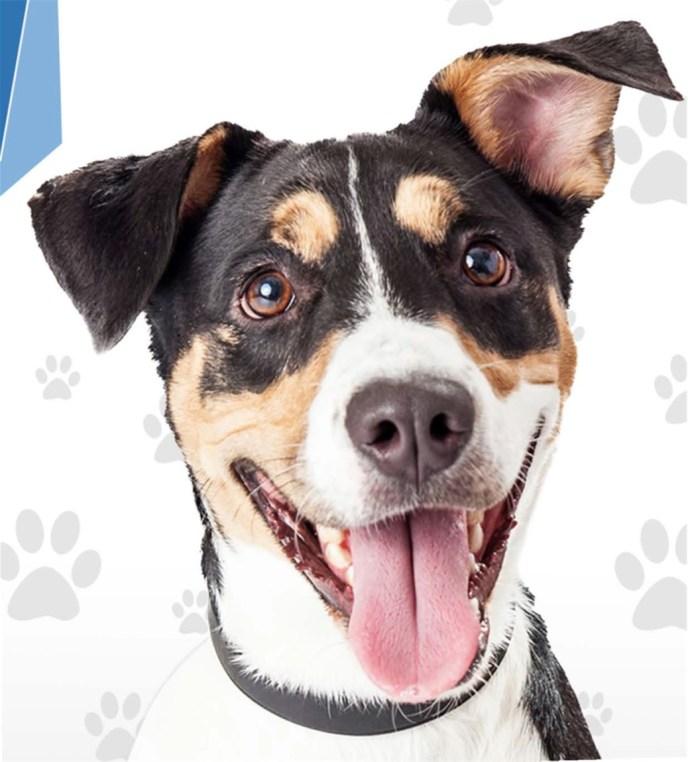 dog training demo