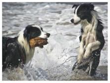 25|08|2011 – Seehunde (IV)