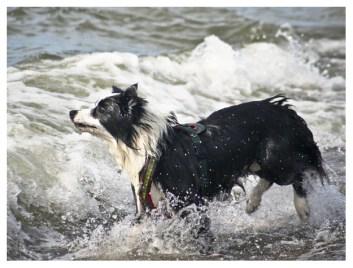 25|08|2011 – Seehunde (I)