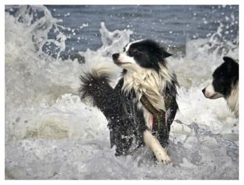 25|08|2011 – Seehunde (II)