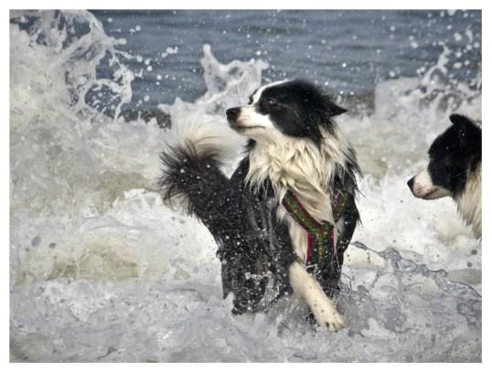 25 08 2011 – Seehunde (II)