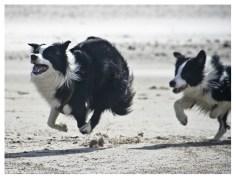 28|08|2011 – Spielende Hunde (XI)