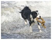 Dänemark, Border Collie, Urlaub mit Hund