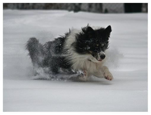 26|12|2010 – Schneetreiben im Westerwald