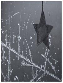 01|02|2012 – Eisblumen bei -12° C Grad.