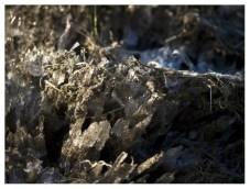 01|02|2012 – Ganz offensichtlich: Bodenfrost