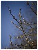 17 03 2012 – Frühling lässt sein blaues Band …