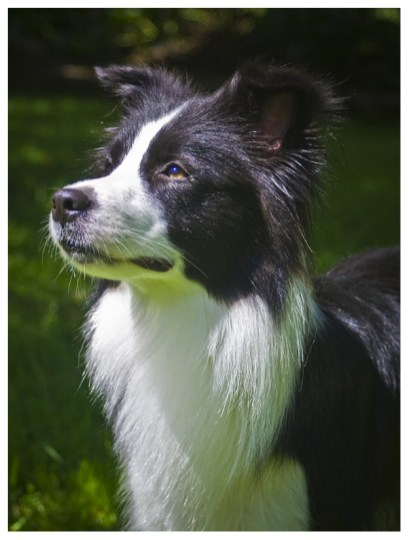 17|06|2012 – Wachhund