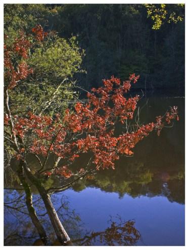 30 09 2012 – Herbstliches Farbenspiel an der Kotzenrother Lay