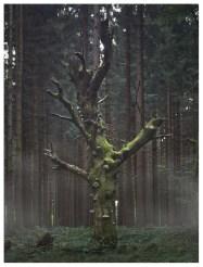 21|09|2012 – Frühnebel im Tannenwald