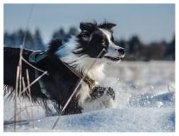 09|02|2013 – Kniehohe Schneewehen
