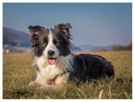 27|03|2013 – Grüne Wiesen, blauer Himmel: Glücklicher Hund!