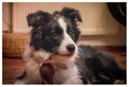 23 11 2013 – Zweiohrhund mit Keinohrhase