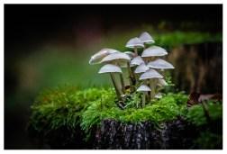 13|10|2013 – Waldbewohner bei Merenberg