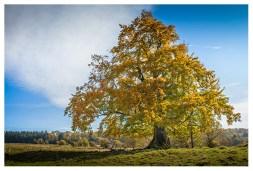 19|10|2013 – Alter Riese bei Oberrod