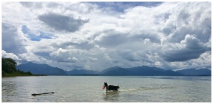 Pepper am Chiemsee: Kleiner Hund, großer See