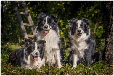04|10|2014 – Ida, Zion und Nell