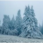 Winter-Züchter-Marken-Märchen