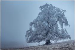 05|12|2014 – Eisnebel am Knoten