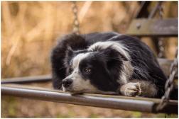 18|04|2015 – Nell schaukelt