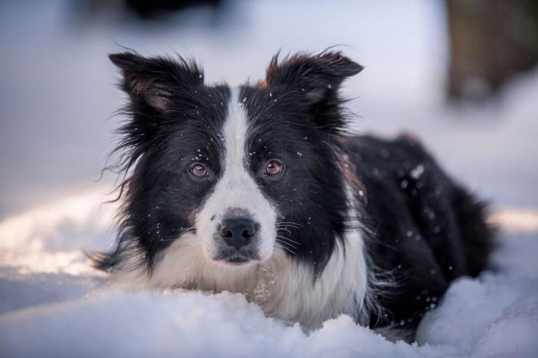 17|01|2016 – Ida im Schnee