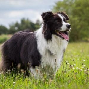 Eine Hundefamilie
