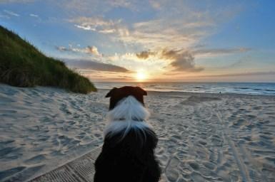 Border Collie Joey macht Urlaub auf Norderney