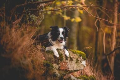 20|10|2016 – Waldspaziergang