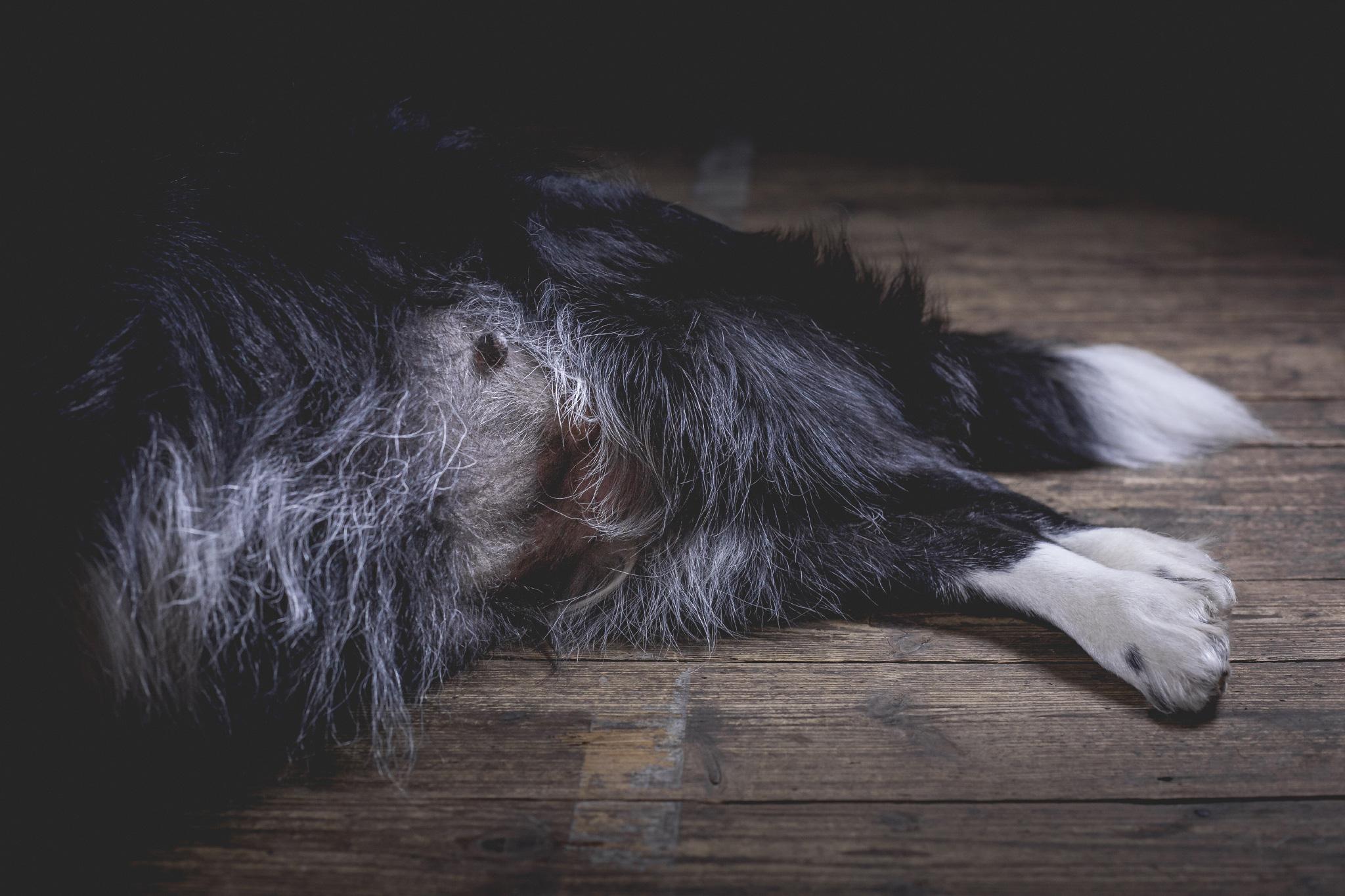 Die 8. Woche: Nells Bauchumfang ist auf 77 Zentimeter angewachsen