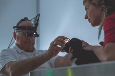 13|04|2017 – Zur Augenuntersuchung in der Tierklinik Betzdorf