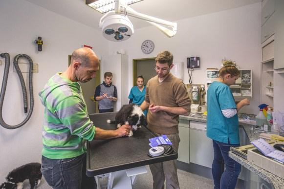 18|04|2017 – Zum Impfen mit unseren fünf Border Collie Welpen