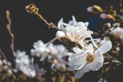 03|04|2017 – Blüten im Garten