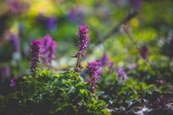 05|04|2017 – Blüten unterwegs