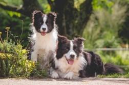 13|08|2017 – Beste Freundinnen: Heidi und Ida