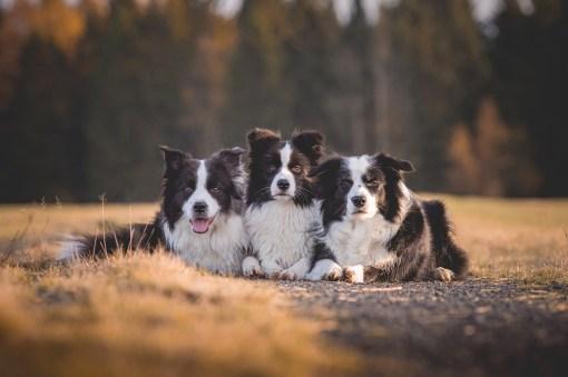 14|11|2017 – Ida, Heidi und Nell