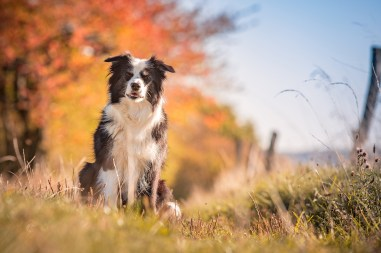 13 10 2018 – Nell