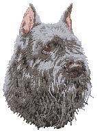 Hundbrodyr Bouvier des flandres