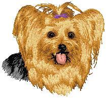 Hundbrodyr Yourkshire terrier 2