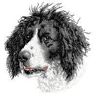 Hundbrodyr Munsterlander