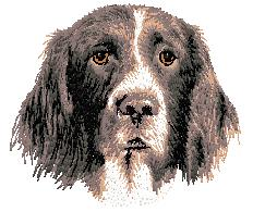 Hundbrodyr Drentsche patrijshound