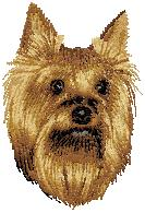 Hundbrodyr Yorkshire terrier 1