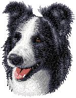 Hundbrodyr Border collie