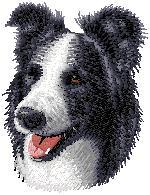 Hundbrodyr Border collie